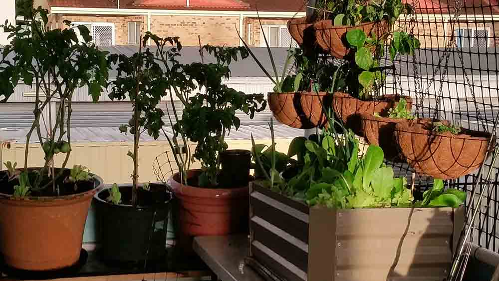 Rooftop-&-Courtyard-Gardens_v0102_low-res