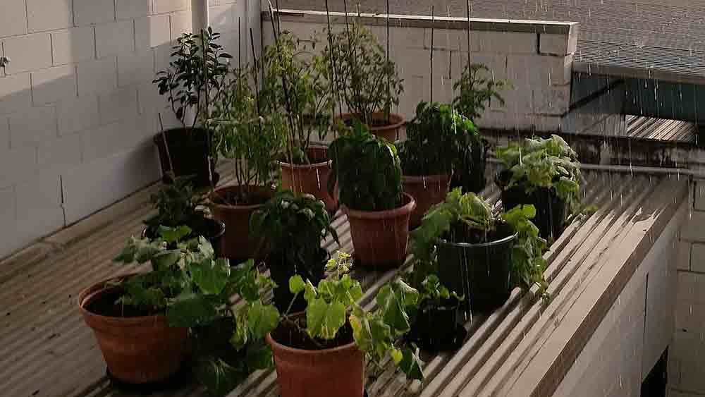 Rooftop-&-Courtyard-Gardens_v0103_low-res